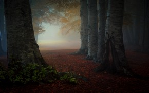 Картинка осень, лес, листья, деревья, туман, парк, стволы, утро, полумрак