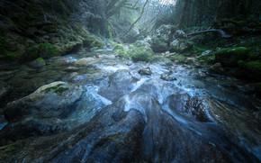 Картинка лес, камни, мох, поток, речка