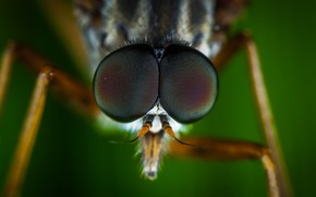 Картинка Макро, Муха, Глаза, Little, Насекомое, Macro, Fly, Insect, Close-Up, Egor Kamelev, by Egor Kamelev, Brown …
