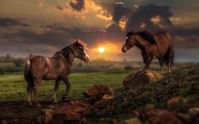 Обои поле, лето, небо, солнце, облака, свет, пейзаж, закат, тучи, природа, камни, две, кони, обработка, вечер, ...