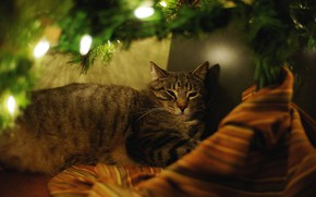 Картинка кошка, кот, ветки, уют, темнота, праздник, новый год, рождество, огоньки, лежит, ёлка, хвоя, гирлянды, материал, …