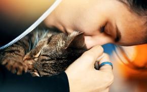 Картинка кот, девушка, любовь, лицо