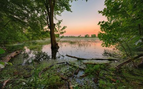 Картинка озеро, утро, заводь