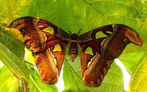 Картинка бабочка, ярко, мотылёк
