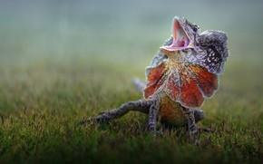 Картинка ящерица, lizard, Fahmi Bhs