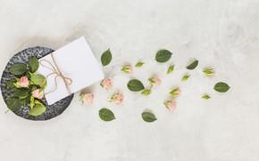 Картинка розы, бутоны, конверт, Romantic
