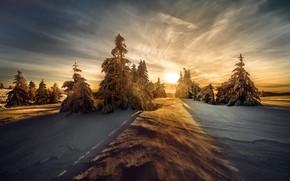 Картинка зима, лес, небо, солнце, облака, свет, снег, закат, природа, вид, красота, даль, вечер, ели, склон, …