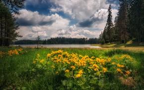 Картинка цветы, озеро, луг