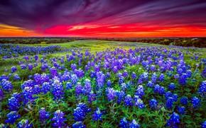 Картинка поле, небо, пейзаж, закат, цветы, красный, яркий, тучи, природа, красное, поляна, цвет, даль, вечер, горизонт, …