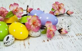 Картинка цветы, яйца, colorful, Пасха, happy, wood, pink, blossom, flowers, spring, Easter, eggs, decoration
