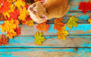 Картинка осень, кошка, листья, фон, дерево, colorful, vintage, wood, cat, background, autumn, leaves, maple