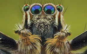 Картинка глаза, макро, фон, портрет, паук, волоски, насекомое