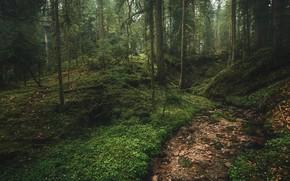 Картинка лес, природа, ручей