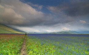 Картинка поле, небо, природа, человек