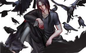 Картинка Uchiha Itachi, NARUTO, Black Bird, Genjutsu, Deathpond