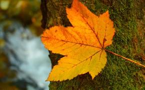 Картинка Листок, Дерево, Осень, Fall, Tree, Autumn, Leave