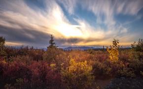 Картинка осень, лес, небо