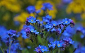 Картинка цветы, сад, боке