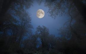 Картинка лес, небо, деревья, ночь, ветки, парк, луна, лунный свет, кроны
