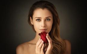 Картинка цветок, взгляд, роза, Девушка, Николай Конарев, Полина Коваленко