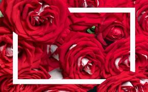Картинка цветы, розы, рамка, красные, бутоны