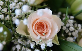 Картинка Flower, Rose, Wallpaper, Wedding bouquet