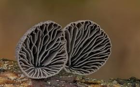 Картинка грибы, пара, Beat Buetikofer