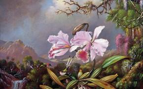 Картинка картина, живопись, холст, Мартин Джонсон Хэд, Martin Johnson Heade, Орхидеи и колибри
