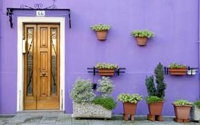 Картинка дом, стена, дверь, вазон