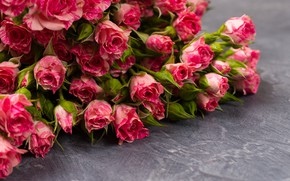 Картинка цветы, розовые, розочки, бутончики