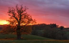 Картинка осень, закат, дерево, Германия