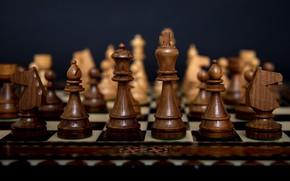 Картинка темный фон, конь, игра, шахматы, фигуры, королева, шахматная доска, король, деревянные, ферзь, игра в шахматы