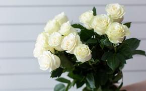 Картинка розы, букет, белые