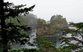 Картинка море, деревья, туман, скалы, побережье