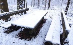Картинка зима, лес, снег, Лапочка, durnovskyi