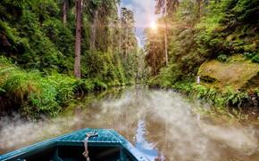 Картинка лес, небо, солнце, деревья, природа, река