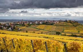 Картинка осень, облака, деревья, тучи, Франция, поля, дома, плантации, виноградники, Riquewihr