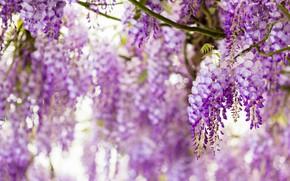 Картинка цветы, крупный план, ветки, природа, блики, настроение, цвет, красота, размытие, весна, лепестки, сад, светлый фон, ...