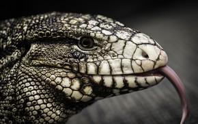 Картинка язык, кожа, рептилия