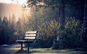 Картинка Nature, Morning, Forest, Trees, Bench