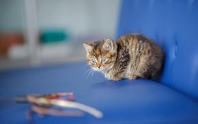 Картинка кошка, взгляд, синий, котенок, фон, диван, малыш, мордочка, милый, котёнок, пятнистый, веревочки, пестрый