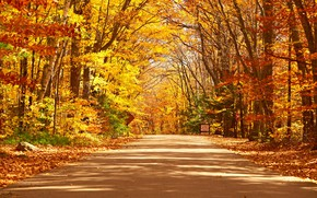 Картинка дорога, осень, лес, листья, деревья, парк, forest, road, landscape, park, autumn, leaves, tree, country, fall