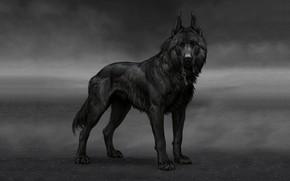 Картинка собака, арт, atenebris