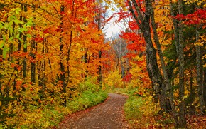 Картинка дорога, лес, деревья, фото, USA, тропинка, Minnesota