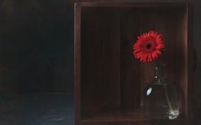 Картинка бутылка, ящик, красная, гербера