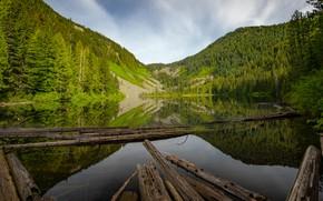 Картинка лес, горы, отражение, водоем, брёвна