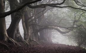 Картинка лес, деревья, ветки, туман, стволы, утро, туманный