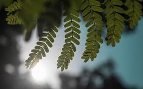 Картинка Зелень, Листок, Листья, Растение, Растения, Leaf, Flora, Leaves, by Ashutosh Sonwani, Ashutosh Sonwani