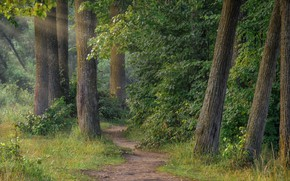 Картинка лес, лето, трава, лучи, деревья, пейзаж, природа, стволы, утро, тропинка, кусты, Андрей Чиж