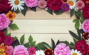 Картинка листья, цветы, фон, розы, ромашки